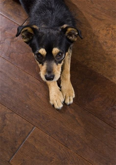 Pet Peeves: Preventing and Repairing Pet Damage to