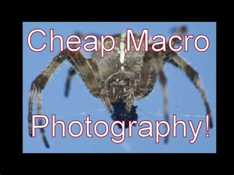 canon dslr macro photography on the cheap m42 lenses