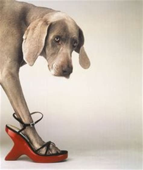 1000+ images about william wegman photography on pinterest