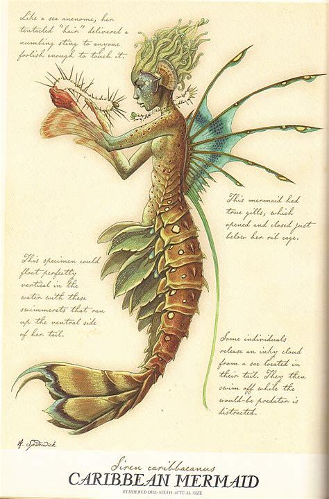 arthur spiderwicks field guide laterna magica mermaid and sea maid from arthur