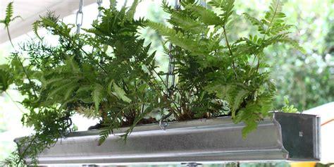 Gutter Planter by Designer Kenneth Wingard Shows How To Make Diy Gutter