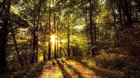 The Light In The Forest by Rays Of Light In The Forest Wallpaper 203138