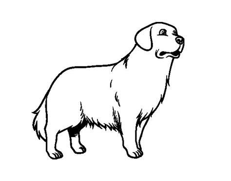 dibujos de perros para colorear dibujosnet dibujo de perro golden retriever para colorear dibujos net