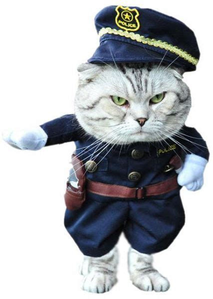 cat clothes cat clothes dress costume suit for cat