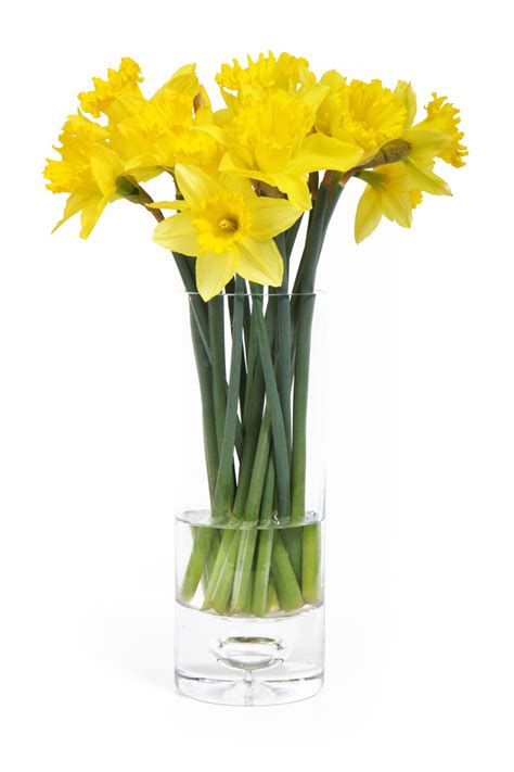Yellow Vase Pv by Daffodils Free Stock Photo Yellow Daffodils In A Vase