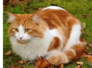 bristol cats study bristol veterinary school