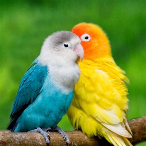 Pakan Juara Burung Bird Favorit budidaya burung burung bird cantik dan romantis