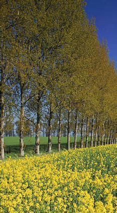 trees the 'imaginative alternative' to speed cameras