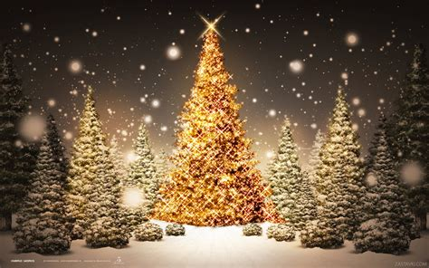 christmas forest wallpapers and images wallpapers