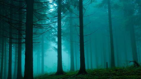 wallpaper blue forest green and blue forest fog 1366x768 63353 jpg 1366 215 768