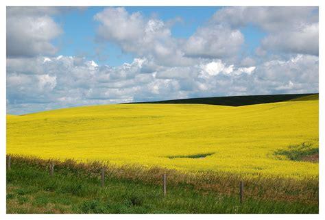 immagini paesaggi fioriti ci fioriti foto immagini paesaggi cagna natura
