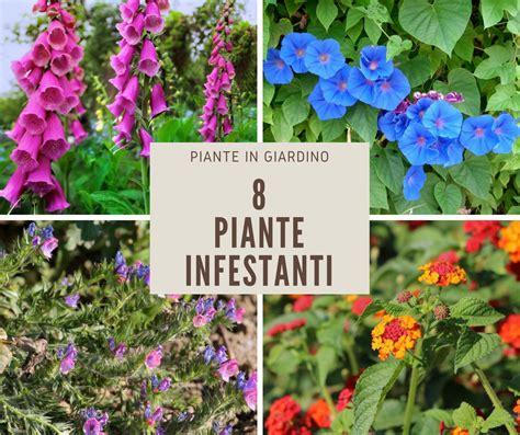 piante infestanti giardino 8 piante infestanti ma decorative fai da te in giardino