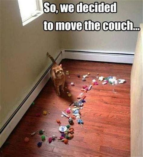 Moving Day Meme - 37 funny animal memes that will have you laughing out loud