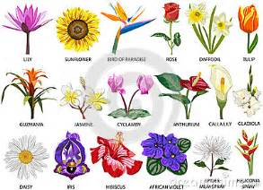 How Many Types Of Lotus Flowers Are There 18 Species Of Colorful Flowers Stock Photo Image 28844950