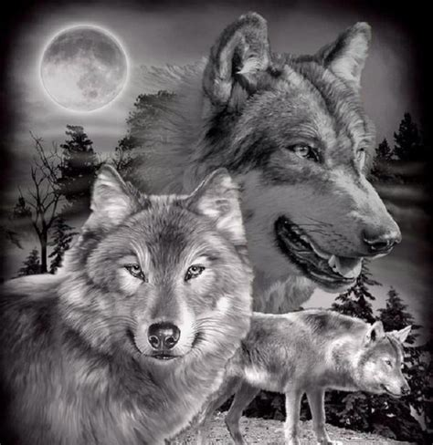 Black White Wolves Wolves And Native American Indians Black Wolf American