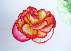 Galerry flower drawing colored pencil