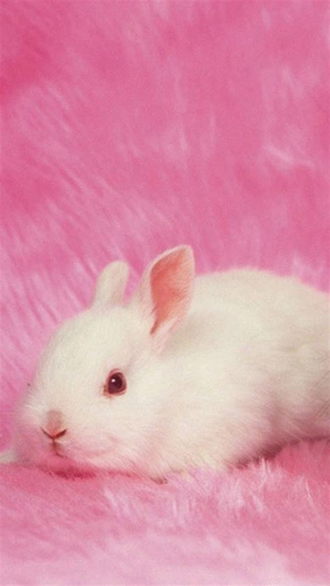 wallpaper pink rabbit cute samsung galaxy s5 wallpapers part 4 pink bunny