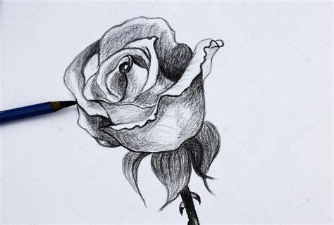 fiori disegni a matita io disegno di fiori a matita foto stock 169 wongchai1972
