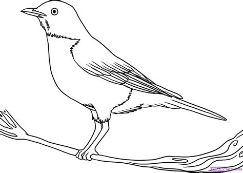 Drawing Of A by Outline Drawing Of A Bird Drawing Sketch Picture