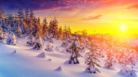 firefox themes snow winter morning light winter nature background