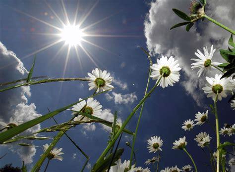 sunlight l for plants plants in direct sun what plants enjoy full sun