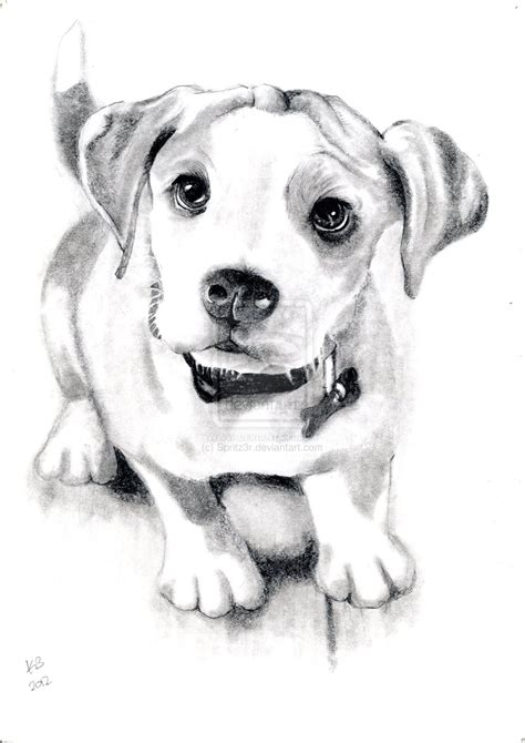 puppy sketch sketch by spritz3r on deviantart