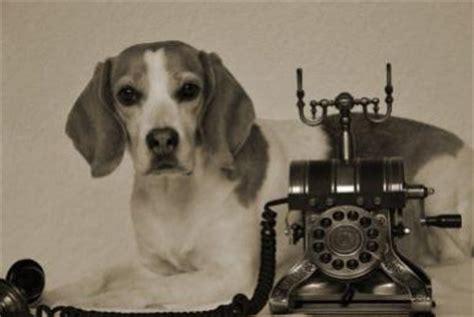 wann hund einschl fern seit wann gibt es das telefon