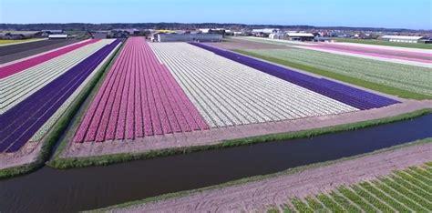 ci di fiori in olanda 10 luoghi dove ammirare le fioriture di primavera al di