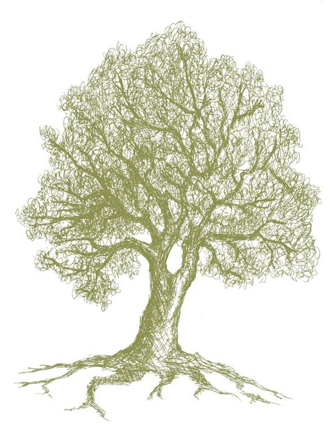oak tree drawing gt sketch every day 3 21 11 love paper paint
