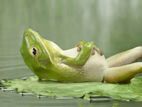 colorful frog colorful frog wallpapers and backgrounds free