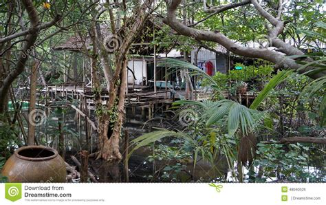 jungle house music jungle house stock photo image 48040526