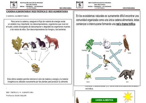 cadena alimentaria y red trofica diferencia cadena alimentaria y red tr 243 fica o red alimentaria