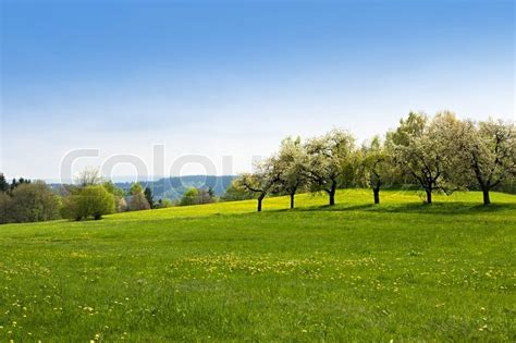 green grass field landscape with blue sky in the