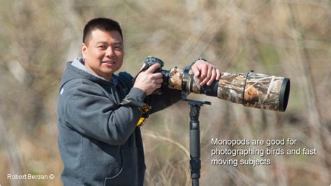 best monopod for sports photography an overview of the best tripods and heads for nature