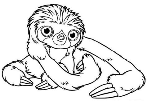 a hilarious sloth coloring book for adults and books perezoso para colorear imprimir y pintar