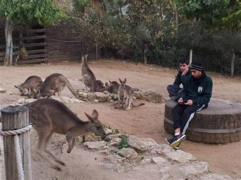tisch family zoological gardens kangaroo enclosure was so cool picture of tisch family