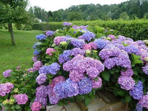 piante da giardino con fiori viola piante da ombra guida completa per un giardino fiorito