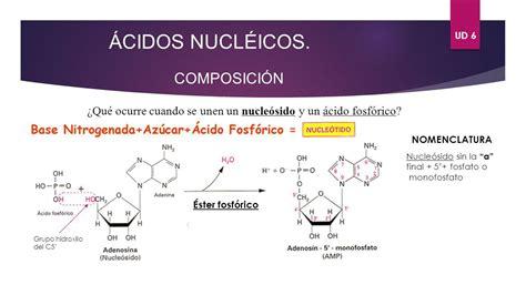 ester fosforico ud 6 193 cidos nucl 201 icos elaborado por chema ariza ppt