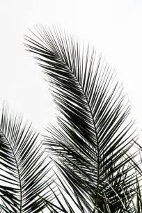 Print A Wallpaper Palm Leaves Art Print Leaf Art And Palm