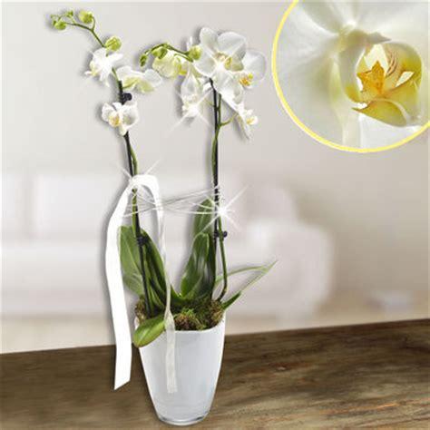 orchideen samen kaufen orchideen versenden orchideen kaufen orchidee versand