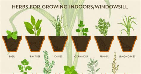 herb grower s cheat sheet this herb garden cheat sheet makes growing herbs easier