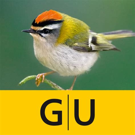 Vogelarten Im Garten by V 246 Gel Bestimmen Erkennen Sie Heimische Vogelarten In Der Natur Und Im Garten An Stimme