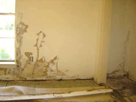 Termites Drywall Paper by Termite Damage To Drywall And How To Repair It
