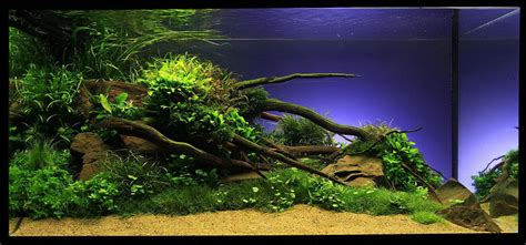 special design aquarium aquascaping aquarium with