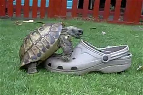 top 11 turtles inanimate objects