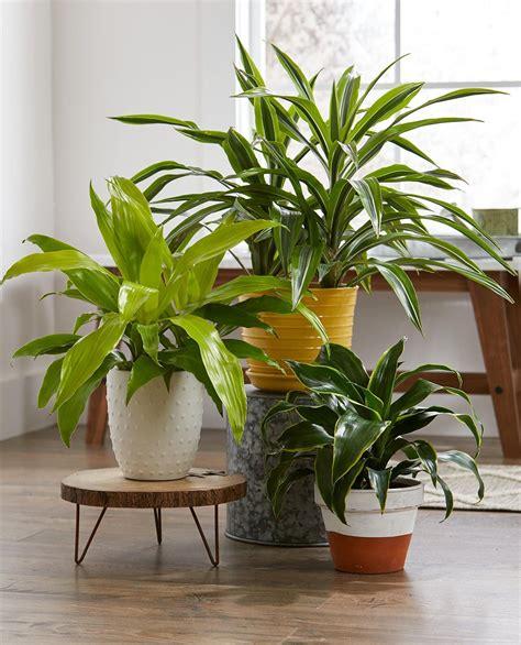 easiest houseplants   grow