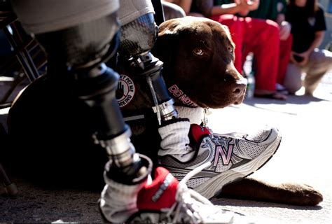 va service dogs va expands policy to allow service dogs counseling today