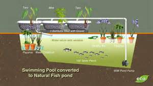 Backyard Trout Farm Converting A Swimming Pool To Grow Fish Ecofilms