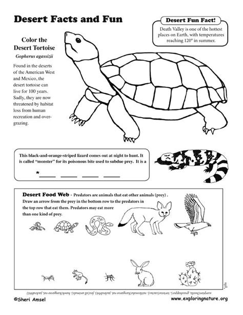 printable desert animal pictures 29 best images about coloring habitats and animals on