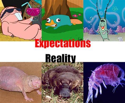 Naked Mole Rat Meme - expectations vs reality part 2 21 pics